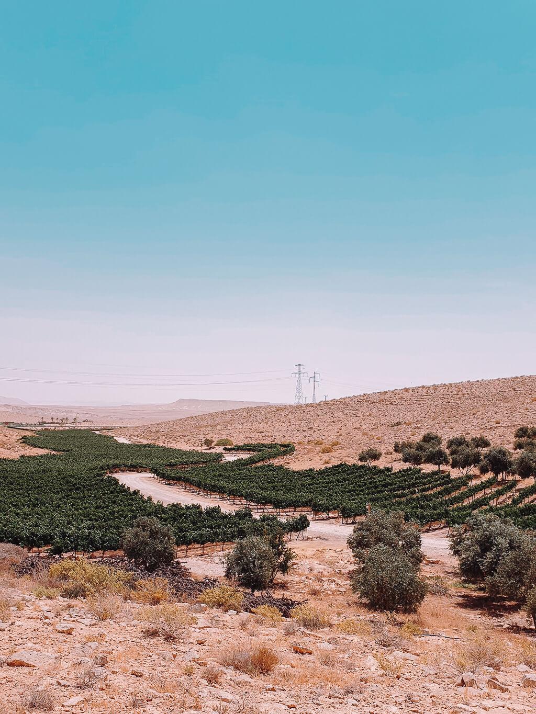 חוות כרמי עבדת יין וצימרים בערבה