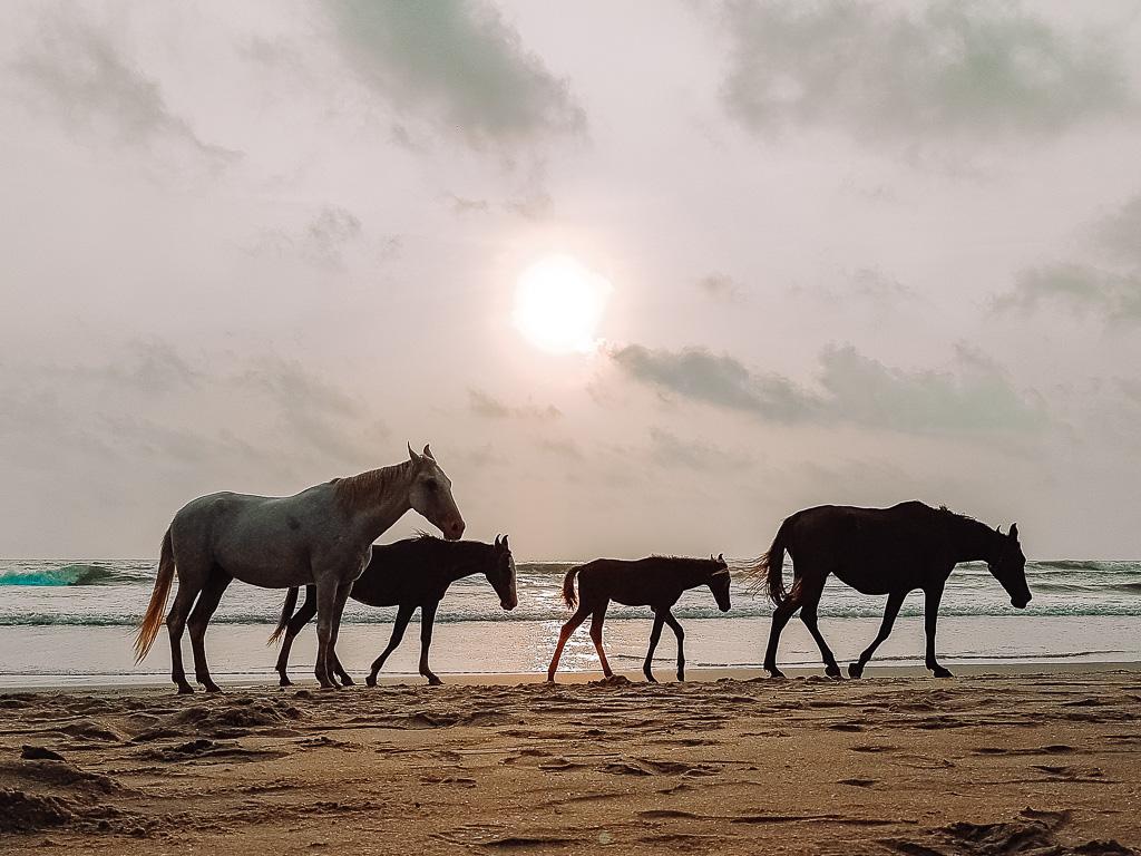 עדר סוסים פראיים על חוף הים - הצבת מטרות ותכנון שנת 2021   The Glow Getter